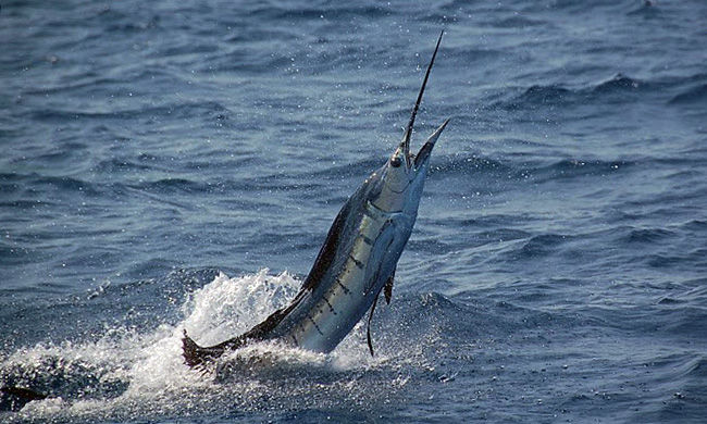301 moved permanently for Costa rica fishing packages