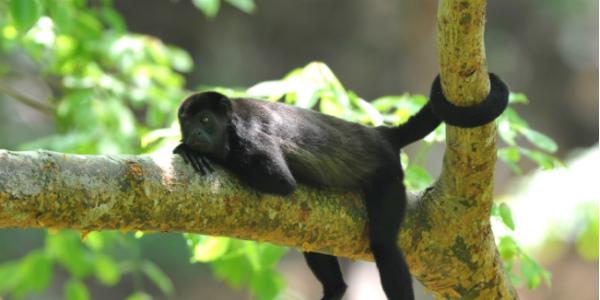 Monkey Around Family Vacation