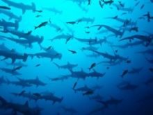 Costa Rica's Diving Highlights