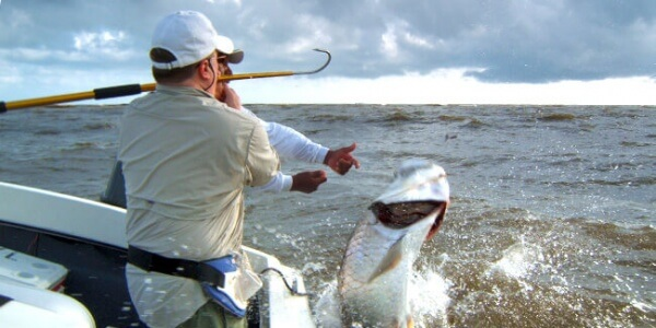 Tarpon Fishing on the Caribbean