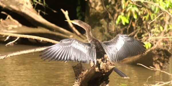Caño Negro Wildlife Refuge