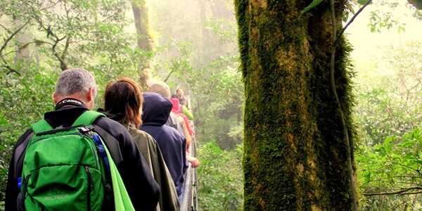 Monteverde Cloud Forest Reserve Day or Night Tour