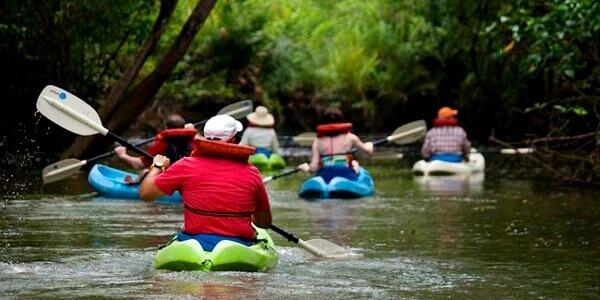 Damas Island Mangrove Kayak or Boat Tour