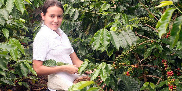 Organic Coffee Farm Tour