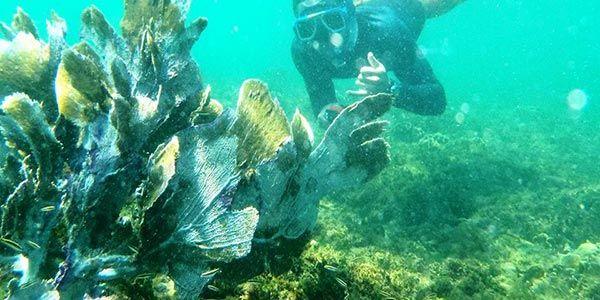 Snorkeling in Cahuita National Park