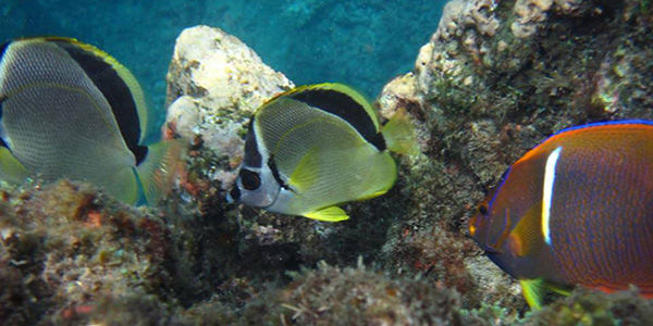 Cano Island Snorkeling from Uvita