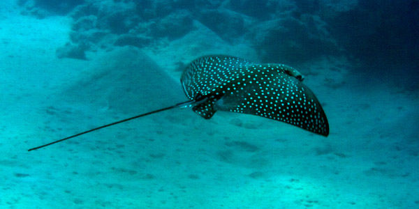 Guanacaste Snorkeling Tour