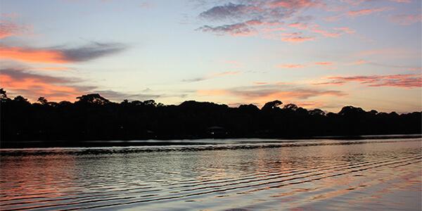 Mangrove & Estuary Boat Tour