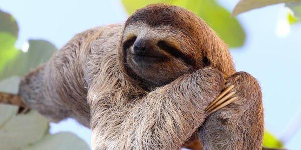 Sloth Spotting Hike