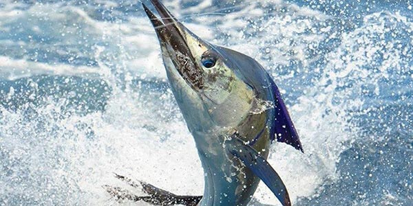 Marlin Fishing Getaway