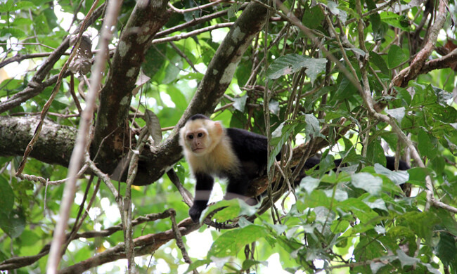manuel-antonio-national-park-tour.jpg