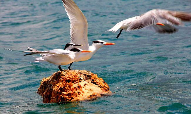 pacific-sea-birds-taking-flight.jpg