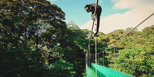 Monteverde One Day Experience