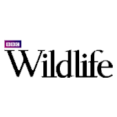 wildlife-magazine-logo.png